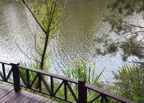 Желтые ирисы у воды, поселок Николино