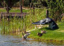Утки, поселок Николино